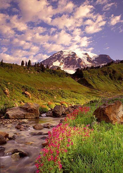 Photos de fleurs et nature page 5 - Initiatives fleurs et nature ...
