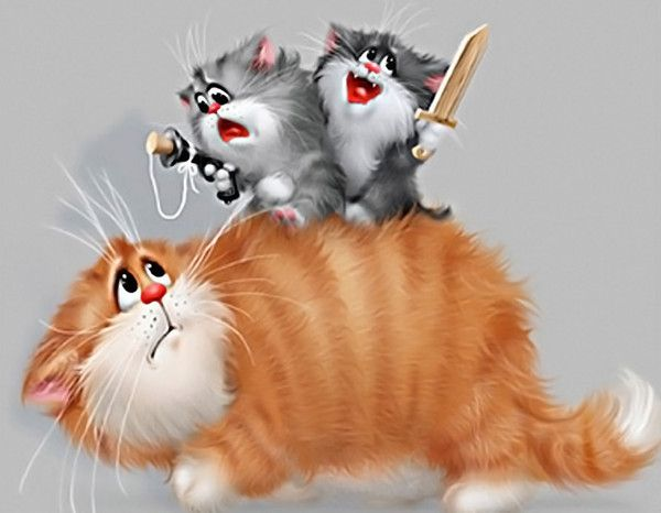 фото котов картинка