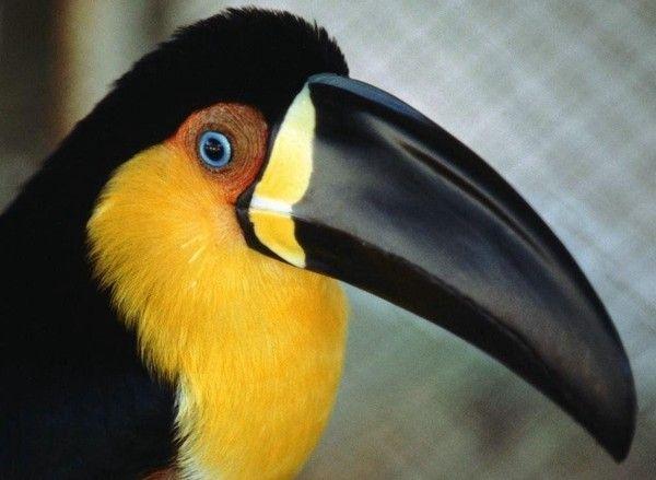 Blog de Nicobola  Biologie animale, Zoologie: diversité, classification,