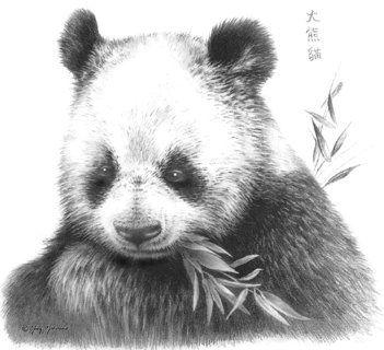 Belle Illustration Animaux Noir Blanc