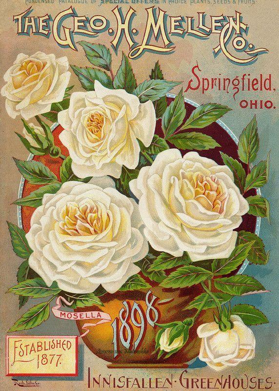 15-illustrations vintages 4 ( fleurs )