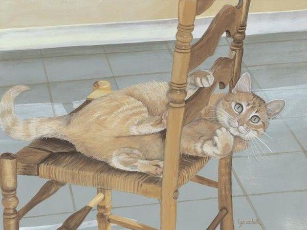 Chats coffre aux tresors C