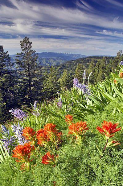 Photos de fleurs et nature page 7 - Initiatives fleurs et nature ...