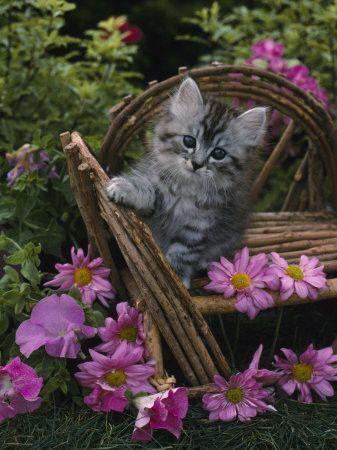 http://pussycatdreams.p.u.pic.centerblog.net/415192fb.jpg