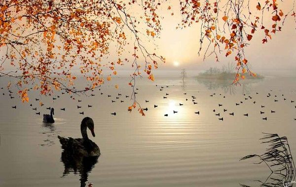 Photographe : Igor Zenin