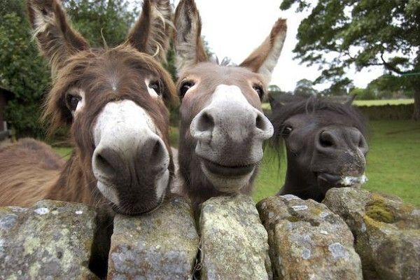 Photos droles et belles d'animaux