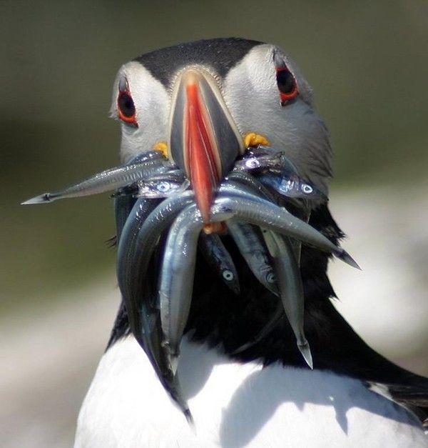 photos droles ou belles d'animaux divers