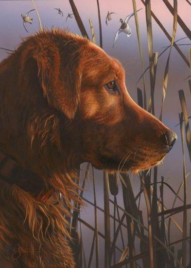 Belles images de chiens