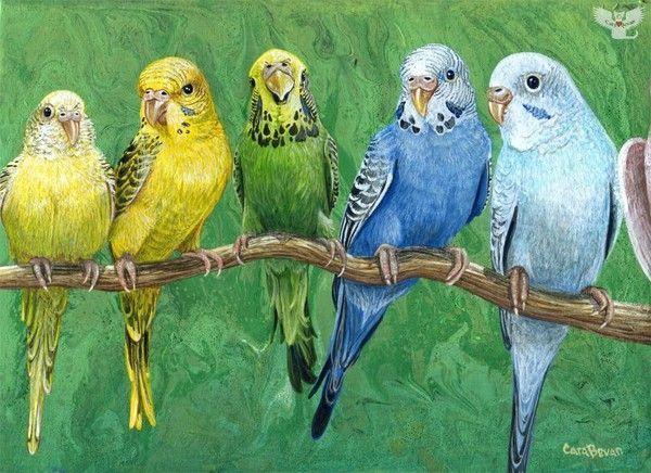 12-Beaux tableaux de Cara Bevan