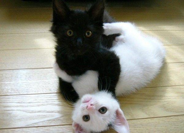 http://pussycatdreams.p.u.pic.centerblog.net/6bc6a181.jpg