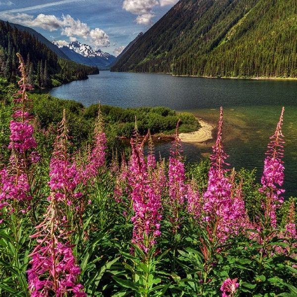Photos de fleurs et nature  ( I.G)