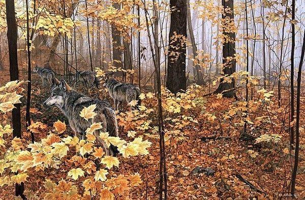 La beauté ailée et animale dans la nature 7202500a