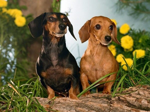 Photos droles ou tendres de chiens