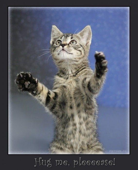 Photos droles ou tendres de chats  (O.P)