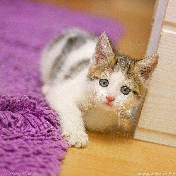 Photos droles ou tendres de chats  ( O.P)