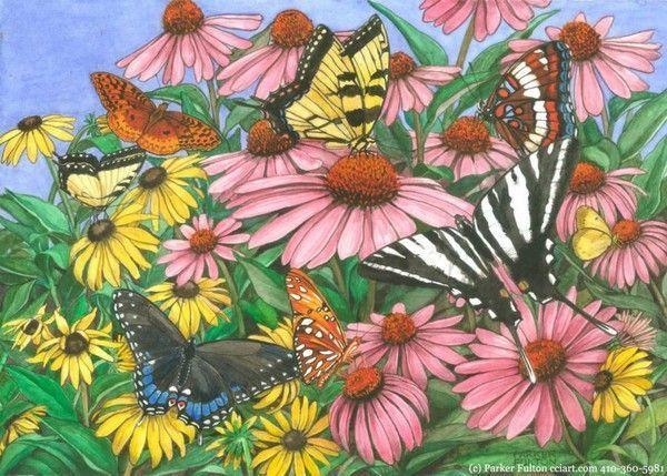 illustrations divers artistes serie E ( Parker Fulton)