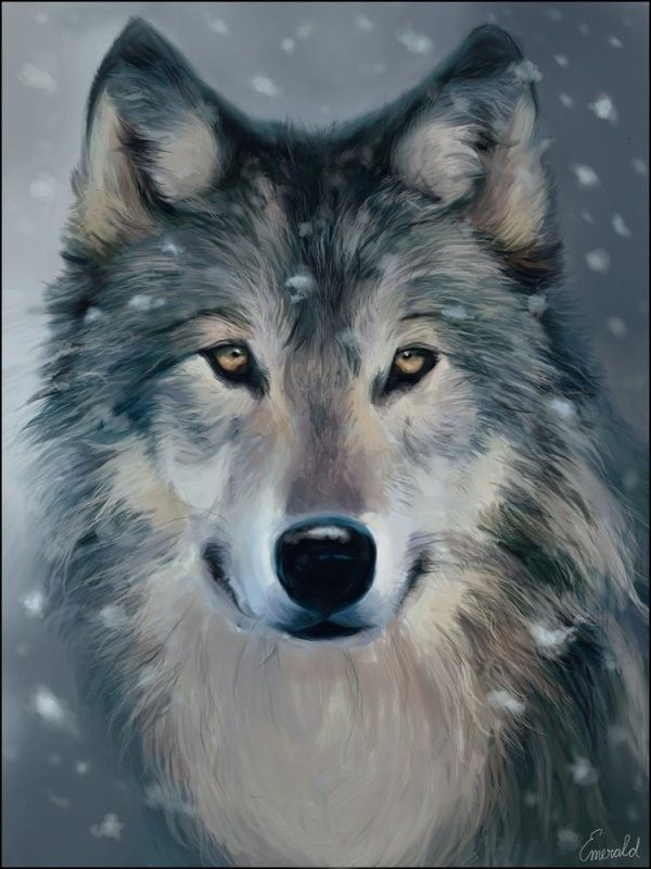 Loups