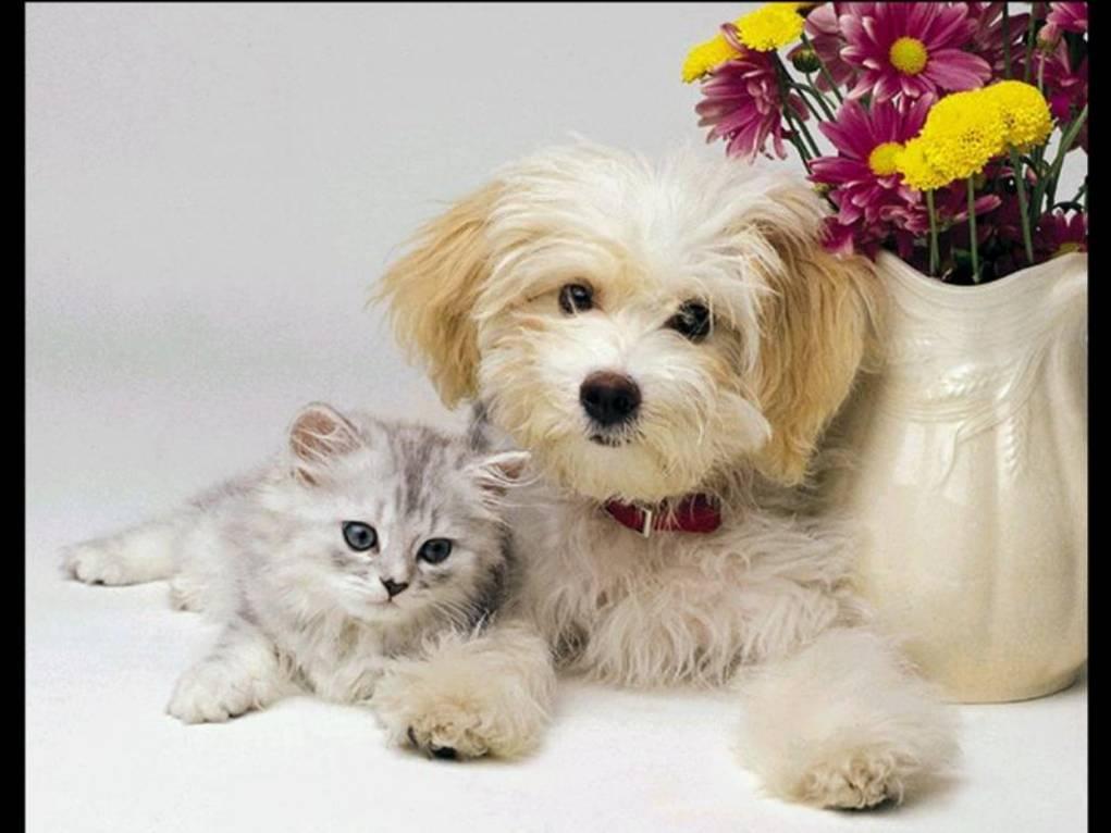 Photos droles ou tendres de chats et de chiens page 5 - Chat ou chien ...