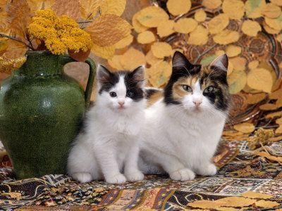 http://pussycatdreams.p.u.pic.centerblog.net/9xdzc1wq.jpg
