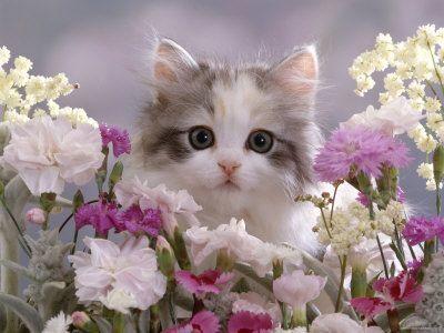 Belles photos de chats