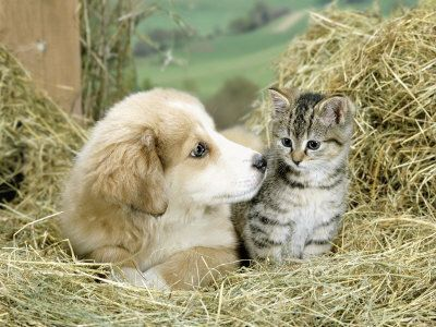 Belle photo de chat et chien