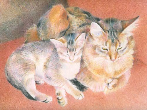 Chats peints serie D (K.T)