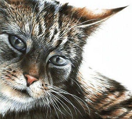 Chats peints serie B