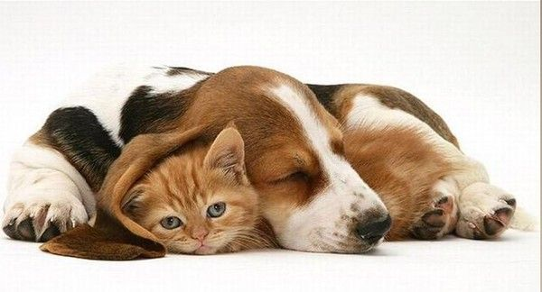 Photos droles ou tendres de chats  et chiens
