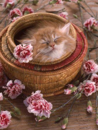 http://pussycatdreams.p.u.pic.centerblog.net/fa8f2a64.jpg