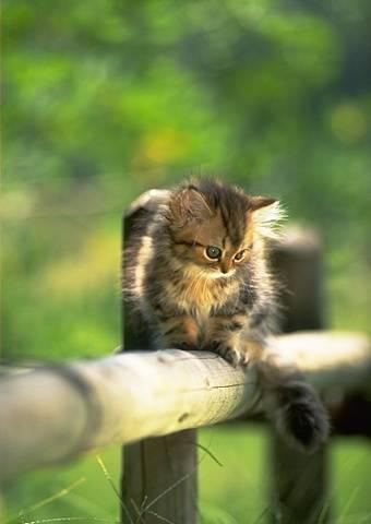 Photos droles ou tendres de chats ( suite )