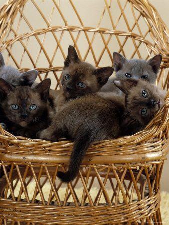 Photos de chats (J.Burton)