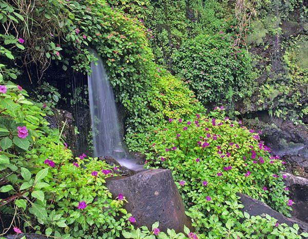 Photos de fleurs et nature page 6 - Initiatives fleurs et nature ...