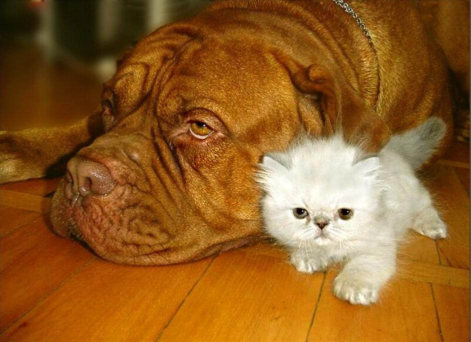 Photos droles ou tendres de chats et de chiens - Chat ou chien ...