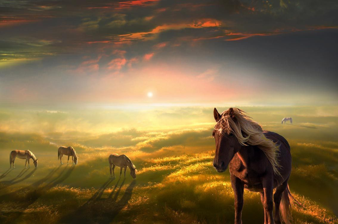 Must see Wallpaper Horse Landscape - 1ce0a779  You Should Have_366320.jpg
