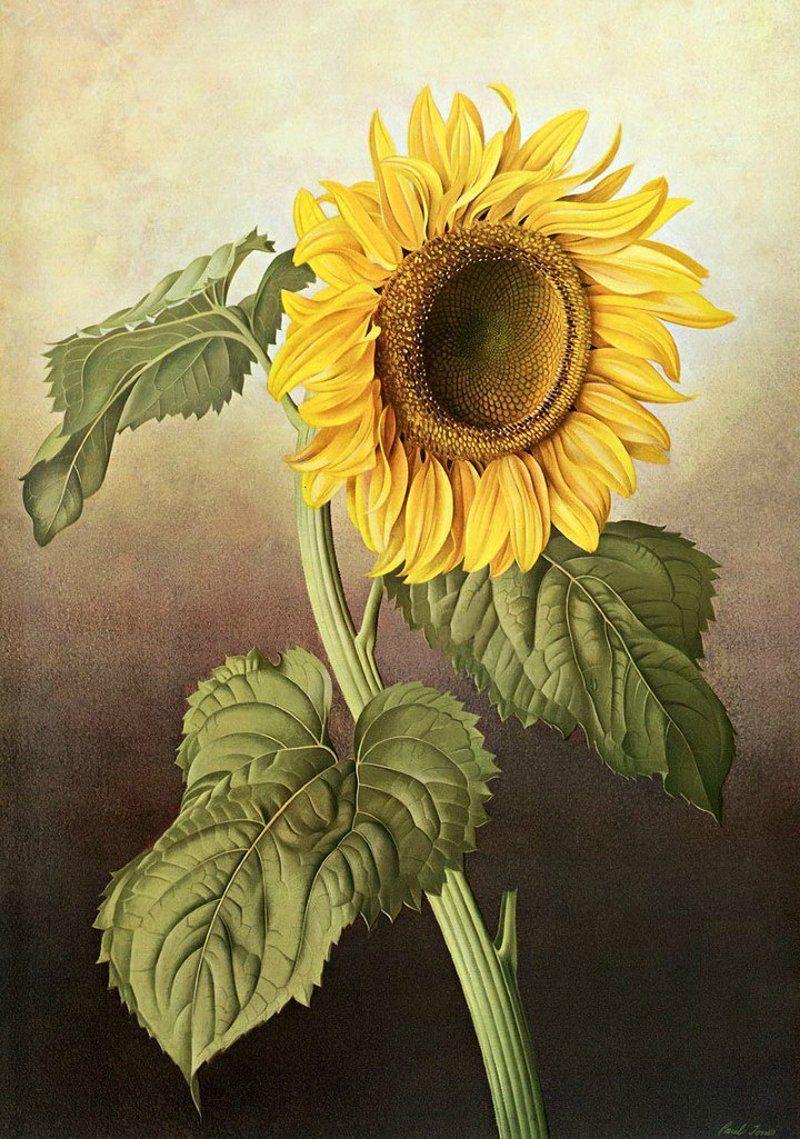 Fleurs et jardins en peinture for Fleurs et jardins