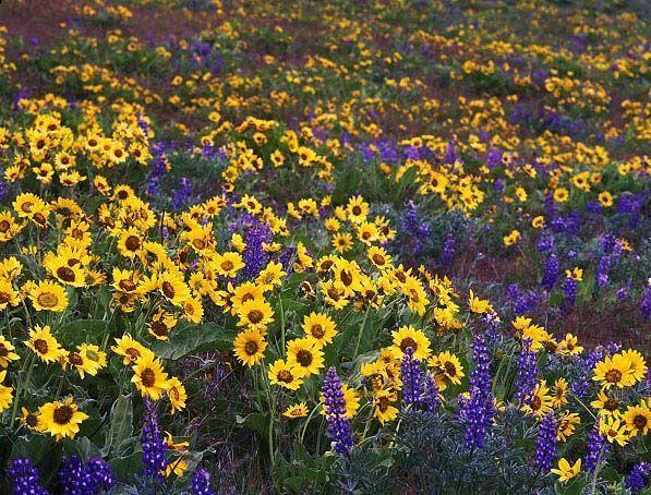 Photos de fleurs et nature page 11 - Initiatives fleurs et nature ...