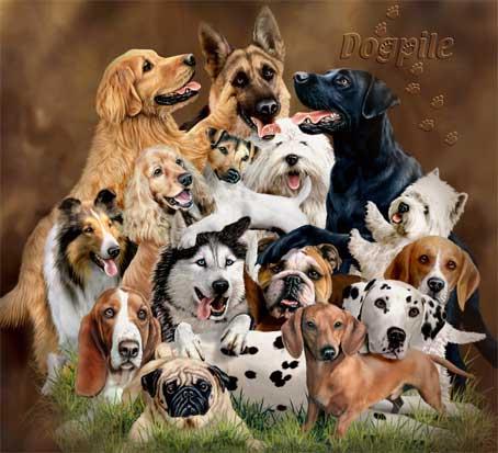 Belles images chiens