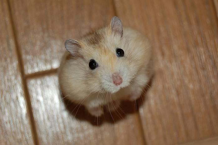 Photos droles d 39 animaux - Videos droles d animaux ...