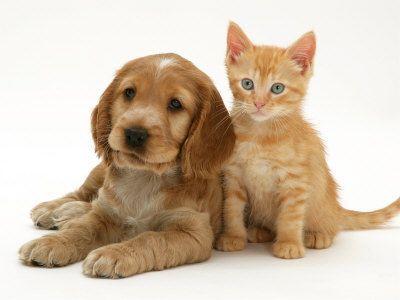 Photos de chats et chiens