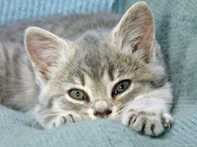 http://pussycatdreams.p.u.pic.centerblog.net/xgu03vrz.jpg